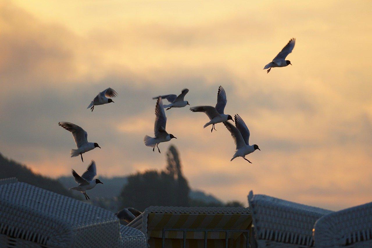 Möwen auf der Insel Vendsyssel-Thy