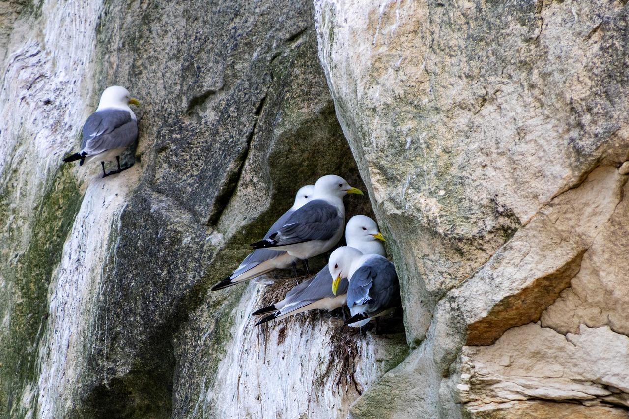 Vogelfelsen Bulbjerg